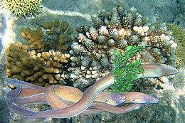 Красное море — феерия красок